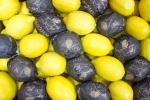 Лимон (Аргентина)
